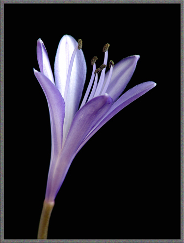 """""""A Single Flower"""""""
