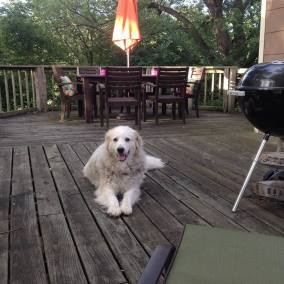 deck dog